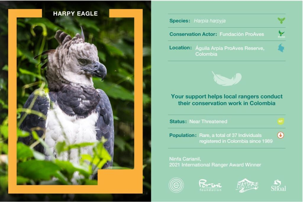 Harpy Eagle Nature Collectible