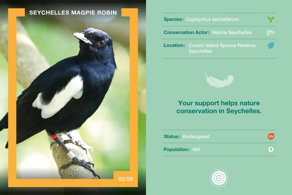 Seychelles Magpie Robin Nature Collectible
